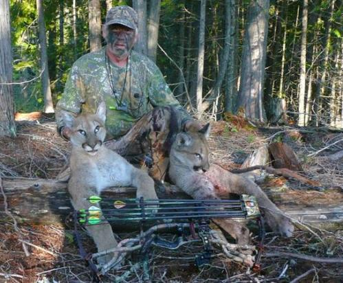 Washington Hunter Kills 2 Mountain Lions With 1 Arrow